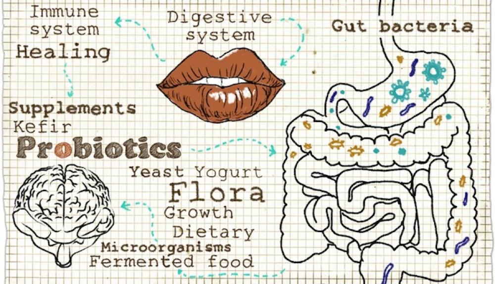 Article Para Que Nos Sirven Los Probioticos 586a08876217d